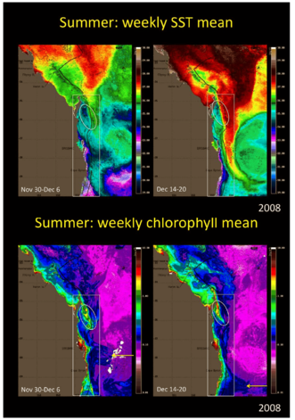 Satellite images of SST (a, upper panels) and chlorophyll (b, lower panels)