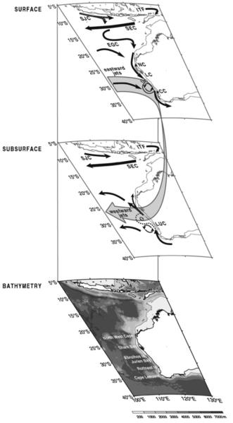 Major ocean currents off the west coast of Australia (Waite et al 2007)