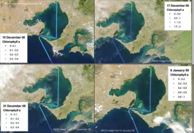 Algal bloom response and recovery from December 2008